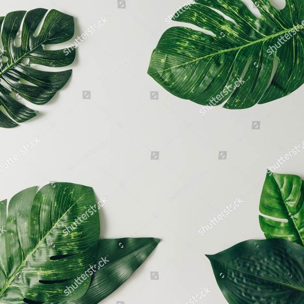 Фотообои Листья пальмы 623931845