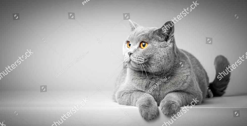Фотообои Кошка 684452362