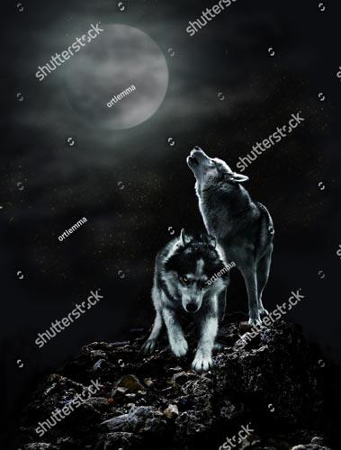 Фотообои Волк и луна 685209826