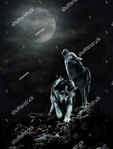 Фотошпалери Вовк і місяць 685209826