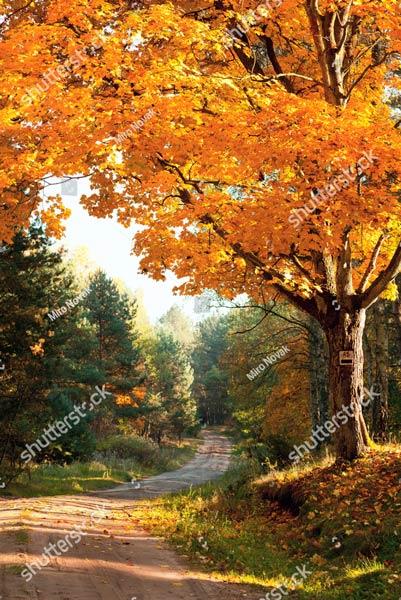 Фотообои Осень 151814249