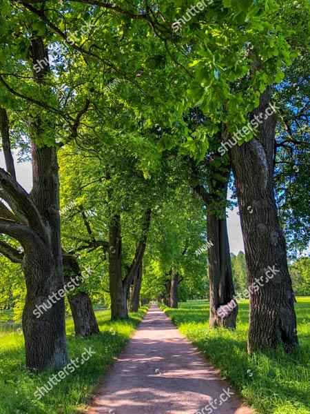 Фотошпалери Ліс 1116713036
