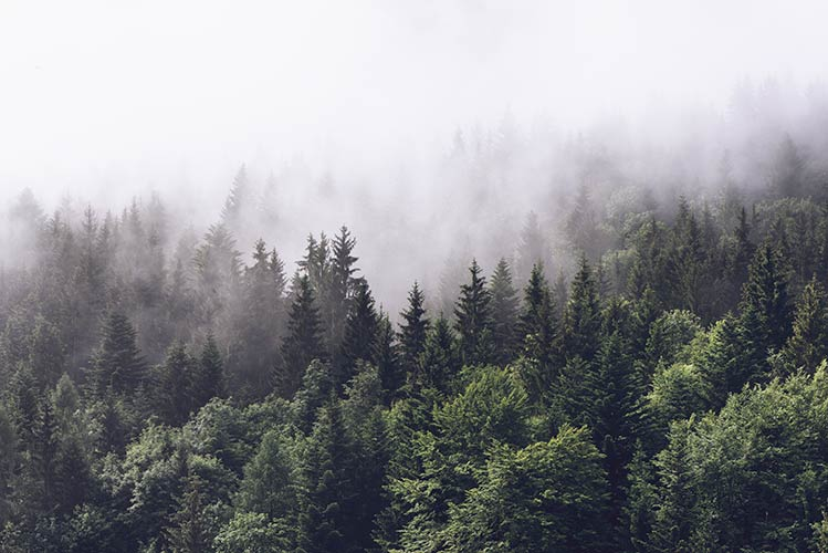 фотошпалери ліс 294267383