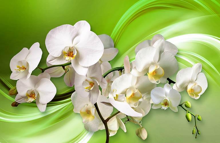 фотошпалери 3д орхідеї 1338211964