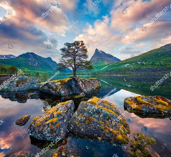 фотообои дерево и горы 692252860