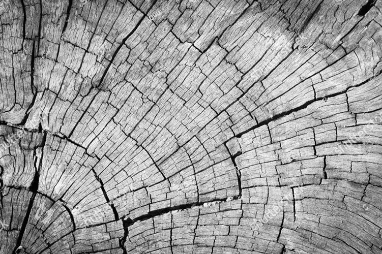 фотообои фон текстура дерева