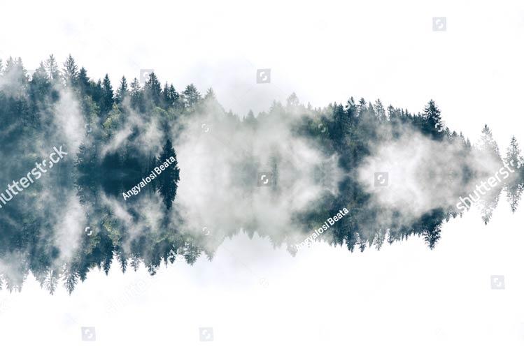 фотообои на стену туман в лесу утро