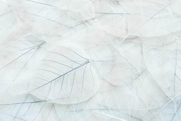 фотообои на стену макро листья