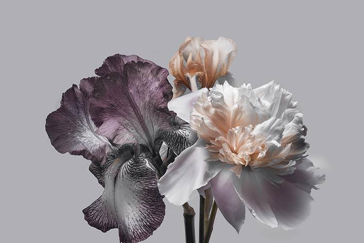 фотошпалери 3д квіти 668312713