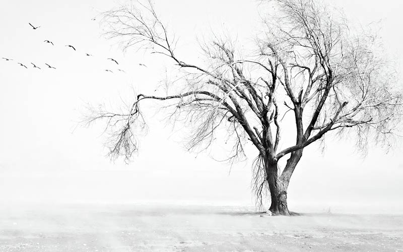 фотообои дерево в тумане 42757769877.